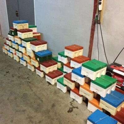 KIler kasser til befrugtning e1494925804817